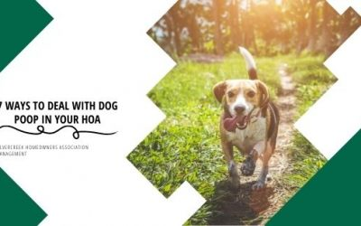 Solving The Poop Problem with Dog Owners in your HOA: 7 Things to Try